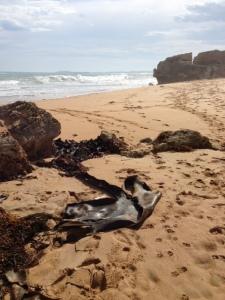 Leather Kelp