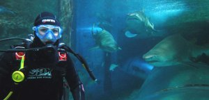 Image from http://www.manlysealifesanctuary.com.au/