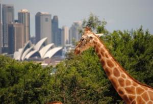 Image from http://www.kidstravelblog.com.au/