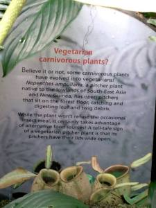 even carnivorous plants have decided to go vegetarian